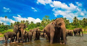 Екзотично пътуване в Шри Ланка! Дати през април и октомври 2017 г и промо цени при ранно записване!