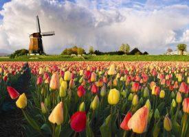 Денят на Краля в приказна Холандия – най-оранжевият ден в годината!!