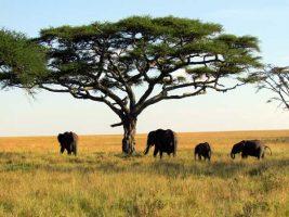 Почивка на о-в Занзибар и сафари в Танзания! Страхотна оферта на цени от 2560 евро!!!